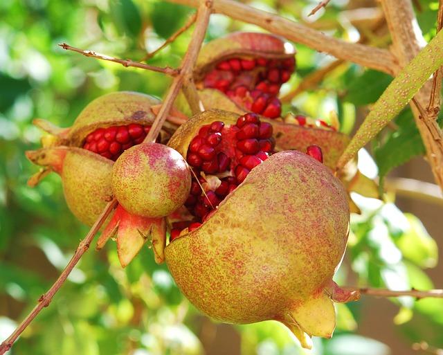 pomegranates-200046_640